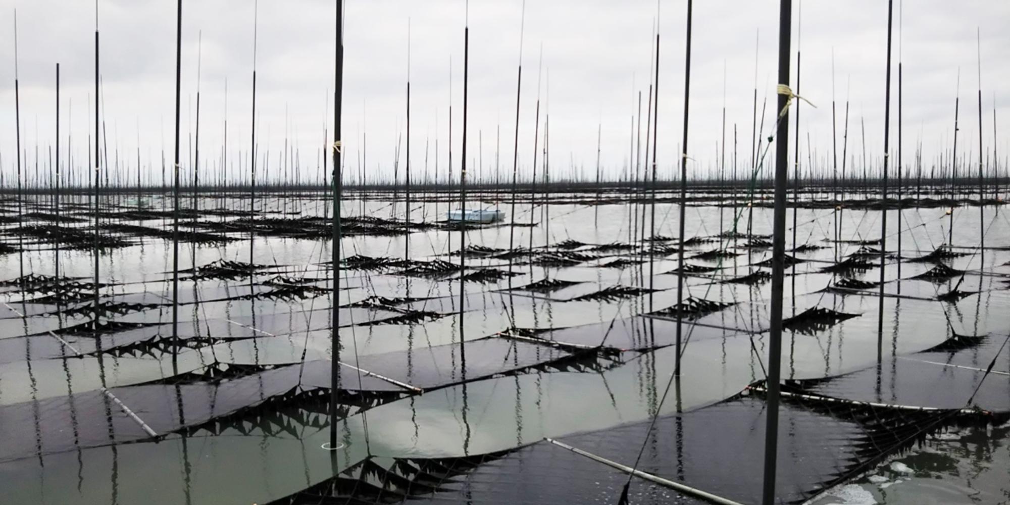 海苔を育てている海の写真